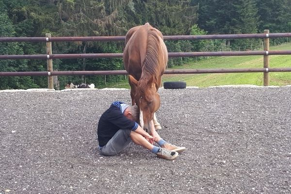 Therapie avec le cheval en liberte cheval tete en bas