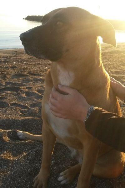 Education canine chien sur plage